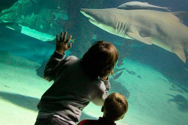 Los descuentos llegan al Zoo Aquarium de Madrid
