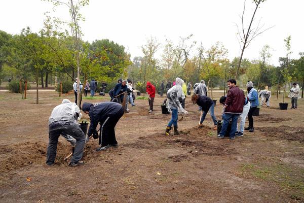 Móstoles replanta 80 árboles que habían sido talados en el Parque de El Soto