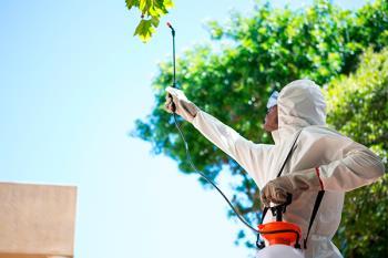 Desde hace varias semanas, el consistorio está inyectando insecticida a los árboles