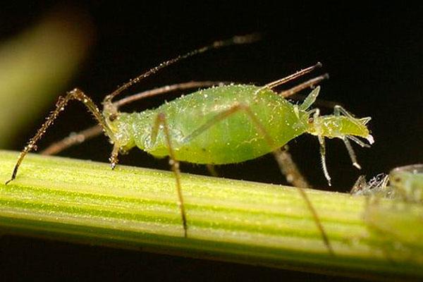 Las cajitas con los insectos se colocarán en los árboles de Zarzaquemada, Batallas y el Ensanche de San Nicasio