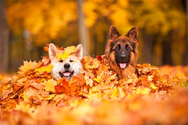 Mascotas: se acerca el otoño