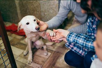 El Ayuntamiento de Leganés lanza esta campaña con motivo de evitar el abandono de animales e impulsar la adopción