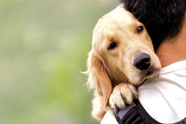 El cuatro de octubre, Día Mundial de los Animales, ya tenemos excusa para mimar a nuestros peludos