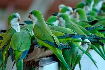 El servicio actuará mediante la captura por red o jaula y la recogida de nidos en espacios públicos