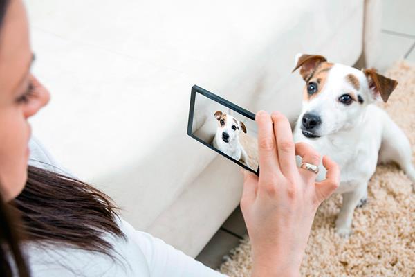 Reconocimiento facial para mascotas