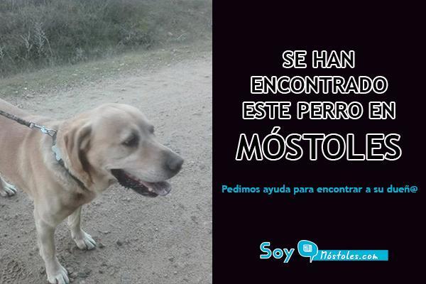 Se han encontrado este perro en Móstoles