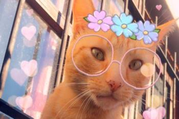 Ya puedes hacerte selfies con tu gato con divertidas máscaras que, hasta ahora, solo funcionaban sobre rostros humanos