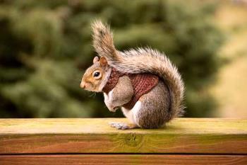 Una mascota encantadora dada su vivacidad y su pequeño tamaño