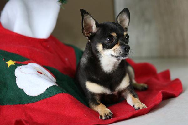 Tus mascotas se merecen su regalo navideño