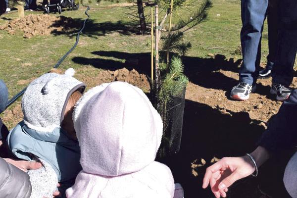 Un árbol por cada niño nacido en 2017