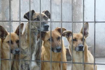 El número de abandonos de animales de compañía aumenta este año 2018