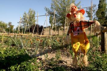 Estos huertos están destinados al cultivo de hortalizas, flores y aromáticas para autoconsumo