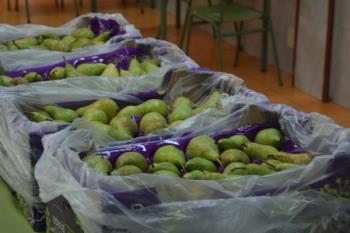 El CEIP Santo Domingo de Guzmán forma parte del programa escolar de consumo de frutas y hortalizas