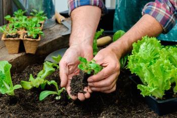 Viajarán a la Alcarria para conocer experiencias de explotaciones hortícolas
