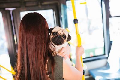 Lee toda la noticia 'Ya podemos viajar con nuestro perro en autobuses de la EMT'