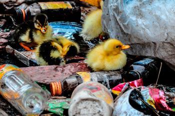 Avanza el anteproyecto de residuos para fomentar la sostenibilidad y la economía circular