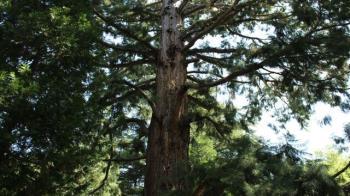 Concejalía de Parques  y Jardines valora salvar el mayor número de árboles posibles