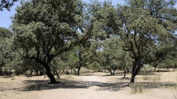 Hasta el momento se han quitado de todos los viales y parques públicos 600.000 m3 de ramas y árboles