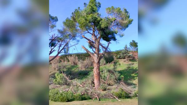 El Pleno aprueba el Plan de recuperación de la masa forestal afectada por Filomena propuesto por Ciudadanos