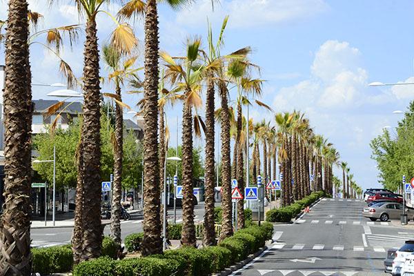Las palmeras restantes se renovarán el próximo año