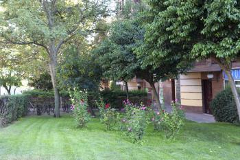 Colegios e institutos podrán solicitar arbustos y árboles
