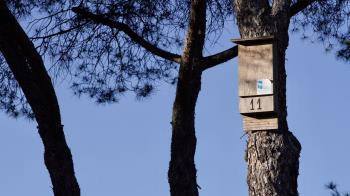 El Ayuntamiento asume la mitad del coste del tratamiento contra las orugas cada año, entre otras medidas