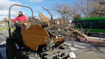El ayuntamiento estima que el 90% de los ejemplares del Monte del Pilar han sido dañados