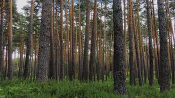 Un estudio de la UAH encuentra la solución casi perfecta para estabilizar el entorno forestal