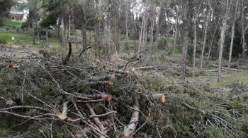 Para reivindicar un plan de actuación tras los daños causados por Filomena