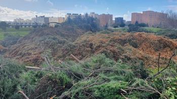 El paso de Filomena dejó demasiadas ramas caídas