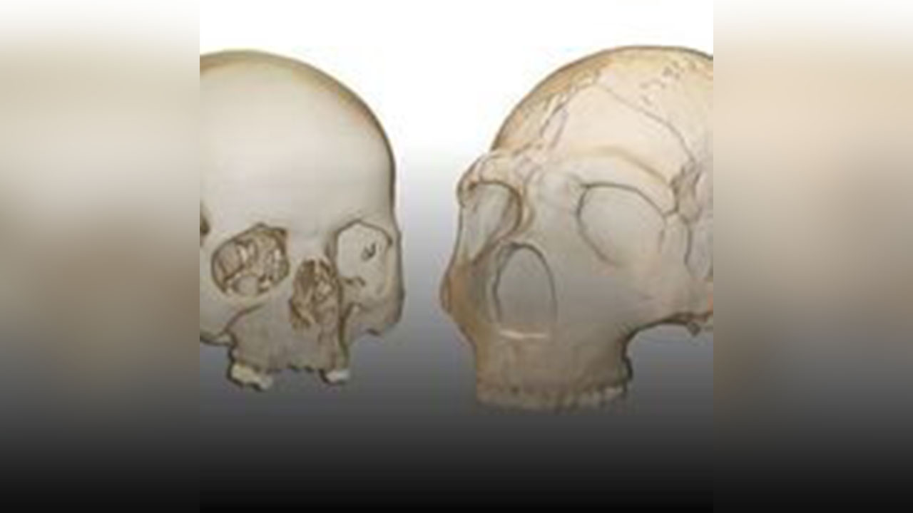 Investigadores españoles encuentran una evidencia paleontológica en HM Hospitales y la Universidad de Alcalá