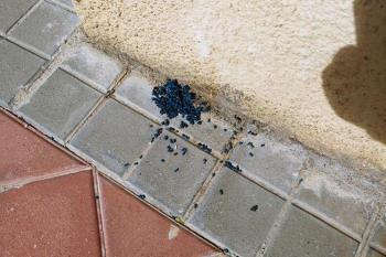 """No es la primera vez que ocurre en esta zona. El veneno son """"como bolitas azules"""" y  puede ser muy peligroso para los niños"""