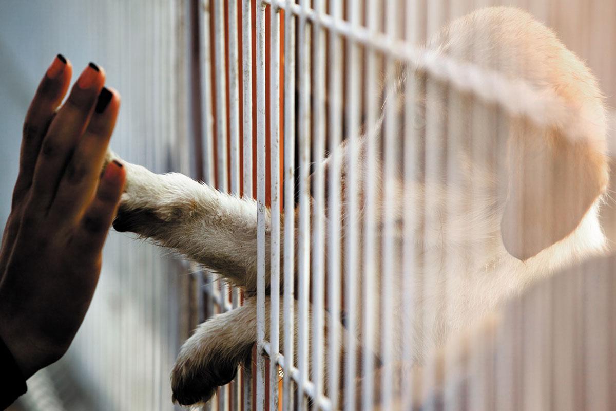 El Ayuntamiento busca dar una segunda oportunidad a los animales del Centro ubicado en nuestro municipio