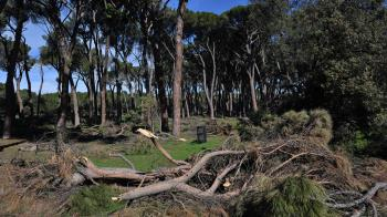 Casi la mitad de los árboles del municipio se vieron afectados por el temporal Filomena