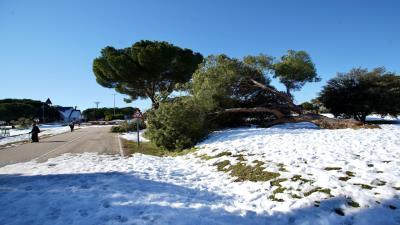 Lee toda la noticia 'El Ayuntamiento pondrá a disposición de los vecinos leña de los árboles dañados por Filomena'