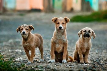 Con este proyecto se persigue concienciar sobre la tenencia responsable de animales de compañía