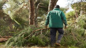 La Concejalía de Medio Ambiente ha adjudicado un contrato de emergencia para la gestión del resto vegetal acumulado por los graves riesgos que puede implicar