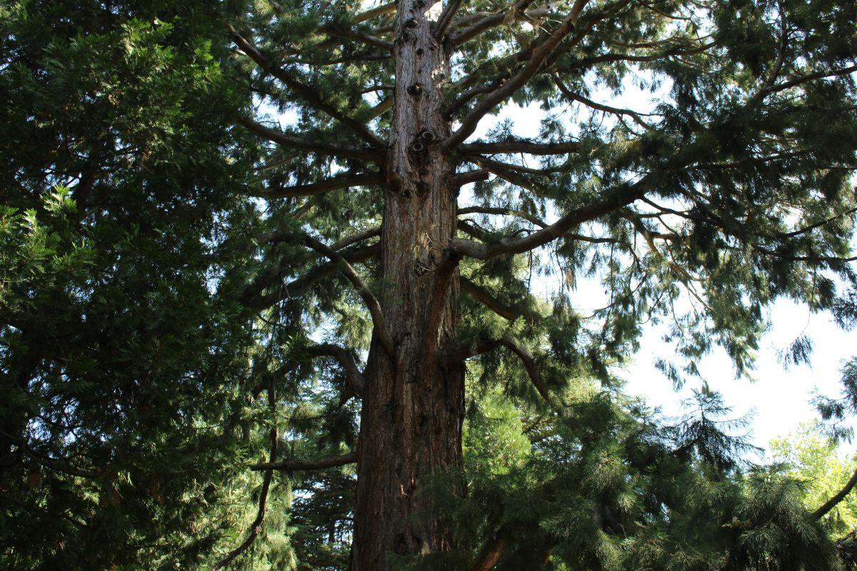 La Campaña de plantación del invierno incluye 470 árboles y 2.000 arbustos