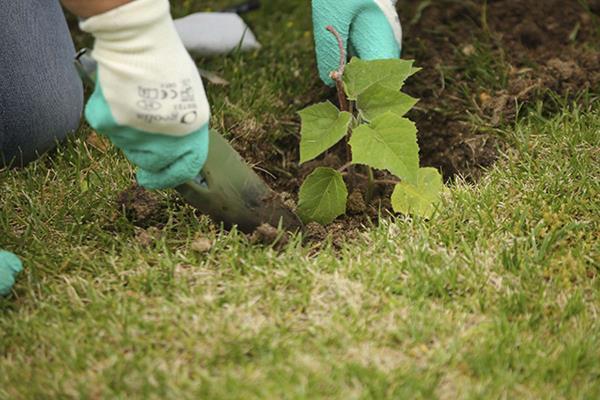 El Ayuntamiento y Reforest trabajarán por la reforestación del municipio