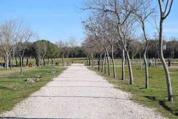 La iniciativa promete evitar la pérdida de masa arbórea y el riesgo de caída de los árboles