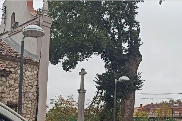 El Imidra de la Comunidad de Madrid clonará en Pinto un olmo centenario dañado por el viento