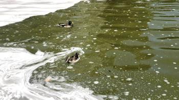 """Lee toda la noticia 'El lago """"contaminado"""" del Parque de la Alhóndiga'"""