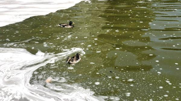 Los vecinos de Getafe denuncian el mal estado del agua del parque