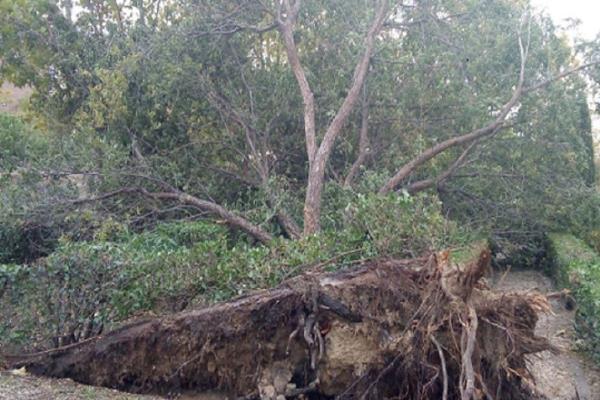 El municipio de Sanse realiza reparaciones de daños que causaron los vientos en los parques