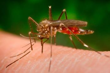 El Aedes japonicus es un vector de transmisión y está muy presente en la zona norte de la península