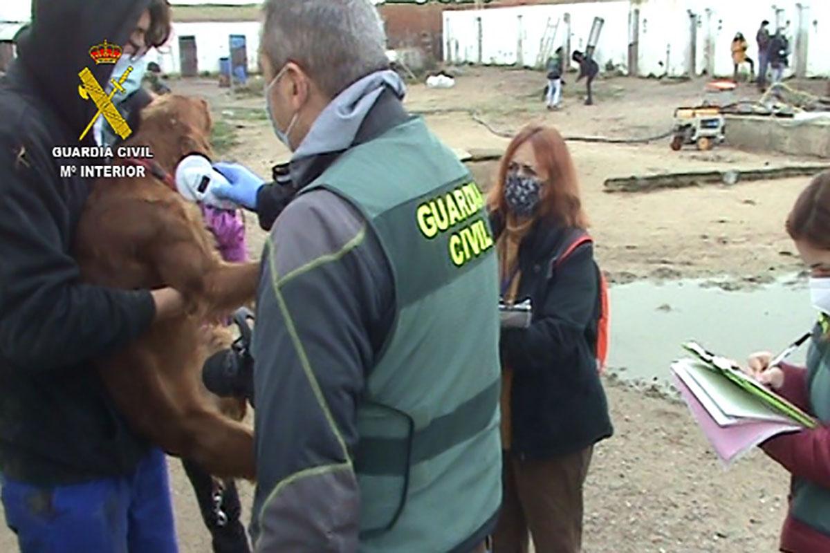 Los animales han sido rescatados por la policía tras meses sufriendo un duro maltrato animal