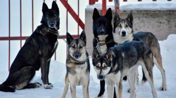 El madrileño se hizo viral tras salir a entrenar con sus perros por las nevadas calles del Barrio de Hortaleza