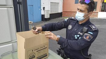 La Policía Local se ha hecho cargo del animal