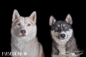 Mascocan celebra un evento anualmente en contra del abandono y el maltrato animal
