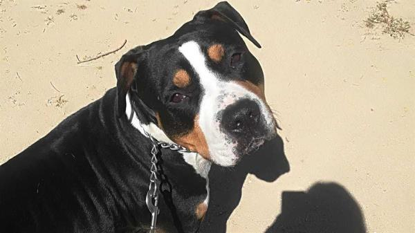 La Guardia Civil de Navalcarnero investiga un caso de maltrato animal en una guardería canina